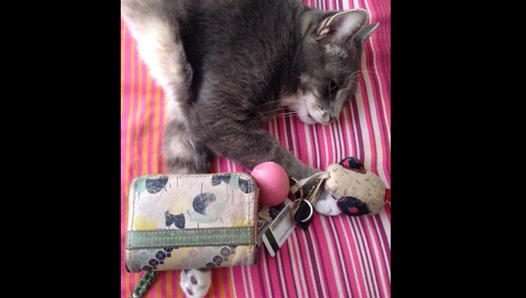 A cat lies on a pink blanket next to some keys and a coin purse.