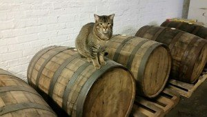 Chicago's Beer Is Guarded By Feral Cats
