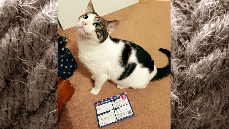 Ted the cat sits next to his missed package message from the post office.