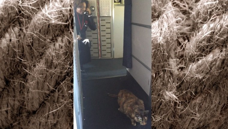 A tortoishell cat sits on the floor of the cabin while a stewardess speaks into an intercom in the background.