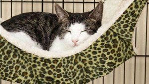 Cat Beds: What Cat Bed Is Right For Your Cat?