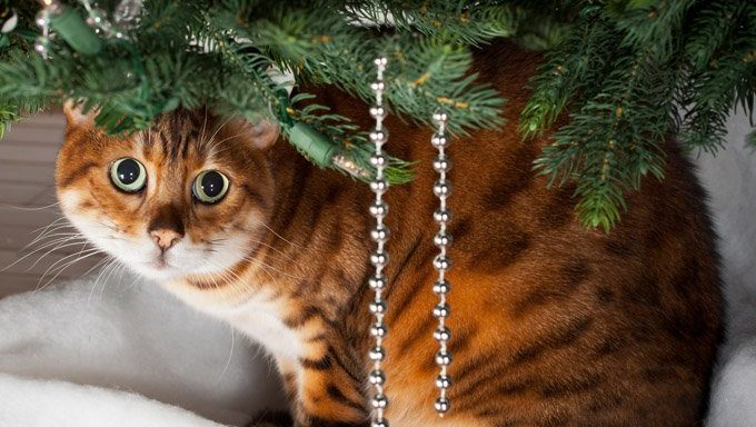 shy cat sitting under christmas tree
