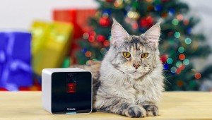 5 Best Video Monitoring Systems To Watch Your Cat When You Travel