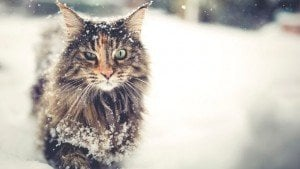 5 Winter Grooming Tips For Cats
