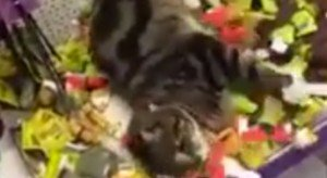 Cat Sneaks Into Pet Store And Goes Crazy In Catnip Toy Section