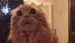 Funny Or Mean? Owner Startles Cat And Posts Picture Online