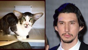 Cat Who Looks Like 'Star Wars' Actor Adam Driver Gets Adopted