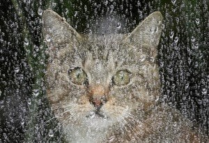 Keeping Your Cats Safe During Winter Storms