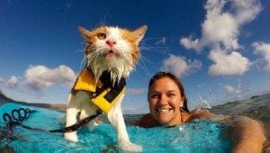 Kuli The One-Eyed, Surfing Cat Loves To Catch Waves In Hawaii