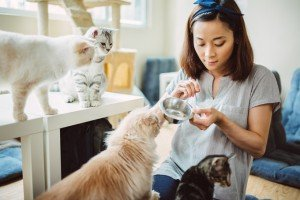 Six Signs Your Cat Loves Your Cat Sitter For Professional Pet Sitters Week