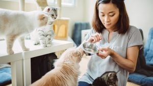 Six Signs Your Kitty Loves Your Cat Sitter For Professional Pet Sitters Week