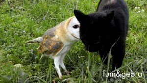 Black Cat And Owl Are Friends: Fum and Gebra [VIDEO]