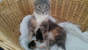 Farm Cat Adopts Newborn Baby Chicks As Her Own Kittens