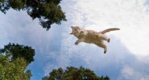 22 Amazing Photographs Of Cats In Flight [Picture Gallery]