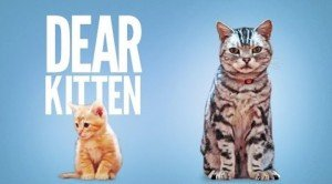 "Funny ""Dear Kitten"" Video Reminds Us How Hilarious Cats Are"