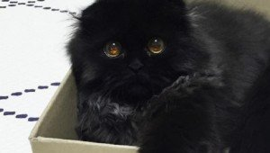 Gimo The Cat's Huge, Adorable Eyes Will Melt Your Heart