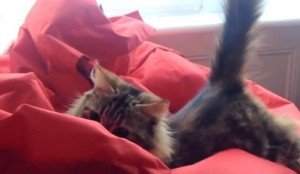 Cats VS. Beanbag Chairs [VIDEO]