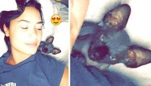 Demi Lovato's New Cat May Be Plotting To Destroy Her