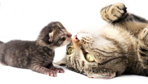 Health Benefits Of Spaying Or Neutering Your Cat