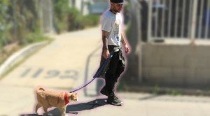 People Trying To Walk Their Cats [VIDEO]