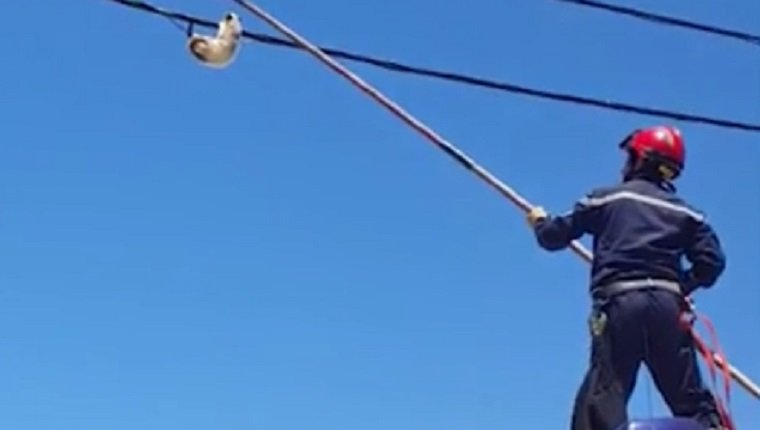 A worker uses a pole to knock the cat off the wire.