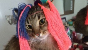 30 Cats In Wigs That Will Make You Laugh [GALLERY]