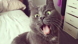Permanently Surprised Cat With Special Needs Inspires The Internet