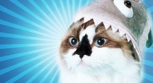 How To Turn Your Cat Into A Super Star And Your Career