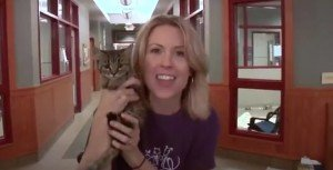 Take A Chance On A Shelter Cat This June [VIDEO]