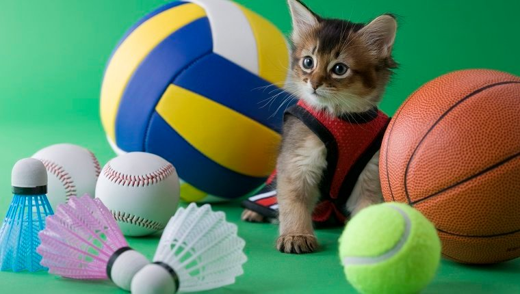 Putting Cats in the Summer Olympics