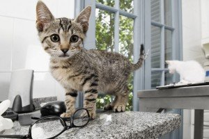 Lawmaker Wants To Make New Jersey The 1st State To Ban Declawing Cats