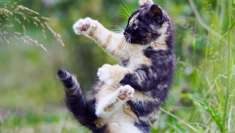 Multicoloured cute kitty in karate style jump position