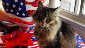 30 Patriotic Cats Celebrating The Fourth Of July
