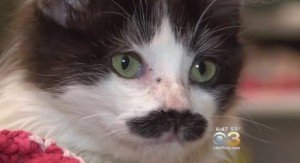 Kitten Dumped In Salvation Army Donation Bin Has A Mustache