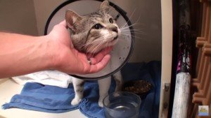 Stray Cat With Puncture Wounds Saved By Vet Ranch [GRAPHIC VIDEO]