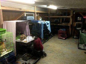 40 Cats Rescued From House Fire In New York