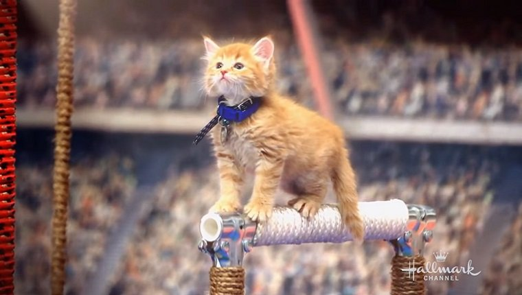 Kitten on a balance beam