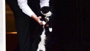Palmerston The Cat Gets Booted Out Of 10 Downing Street By Police