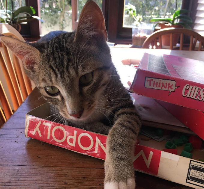 CardboardMonopoly  FUNNY: Cardboard Boxes For Cats, Ranked CardboardMonopoly