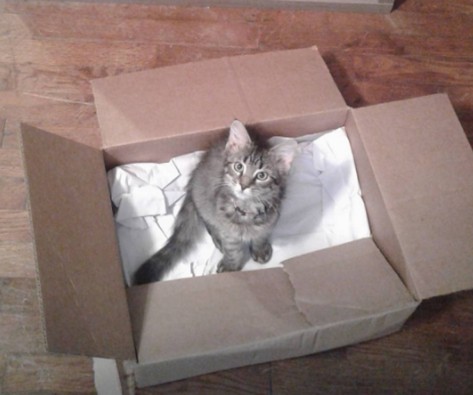 CardboardPackaging  FUNNY: Cardboard Boxes For Cats, Ranked CardboardPackaging