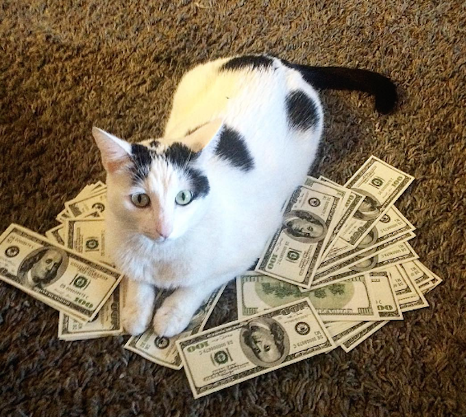 Cash-Cats-Money