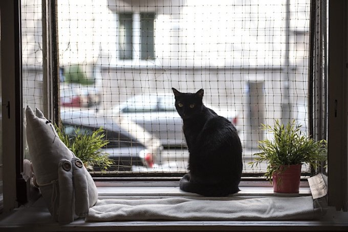 "KRAKOW, POLAND - MAY 04 :A black cat is seen at the Cat Caffee window, Krowoderska 48, Krakow, Poland on May 4, 2016. The Cat Coffee is an attraction for the cat lovers and it is open since the end of June 2015 and has six cats. Two of the cats came from the "" Kocia Academia"" fondation and the other four cats were or found on the street. (Photo by Omar Marques/Anadolu Agency/Getty Images)"