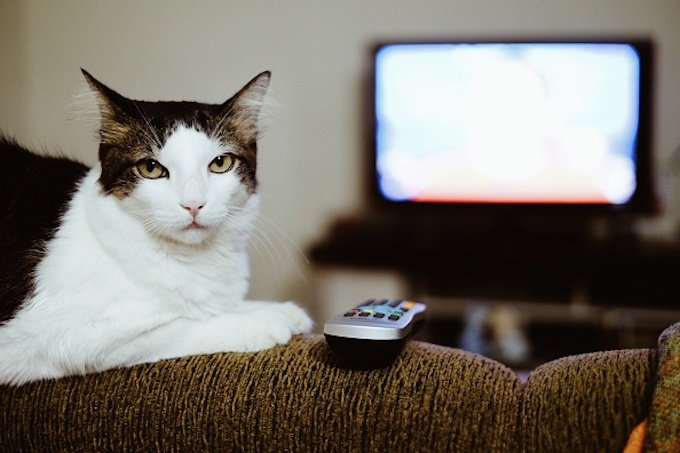 Cat on the couch with a remote.