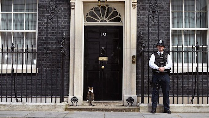 LONDON, ENGLAND - JULY 13: Larry, the 10 Downing Street cat, sits outside the 10 Downing Street on July 13, 2016 in London, England. (Photo by Kate Green/Anadolu Agency/Getty Images)