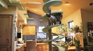 Man Turns His Home Into An Indoor Playland For Rescue Cats And Our Hearts Melt
