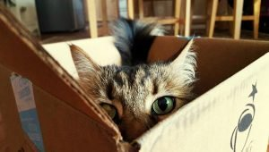 7 Tips For Having A Happy Cat In Happy Cat Month