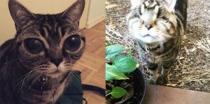 Matilda The Alien Cat Has Lost Her Big Eyes