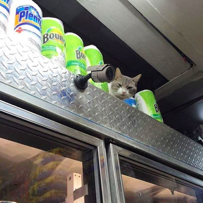 Bodega-Cats-Secutiry-Camera