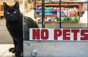 The 10 Bodega Cat Commandments