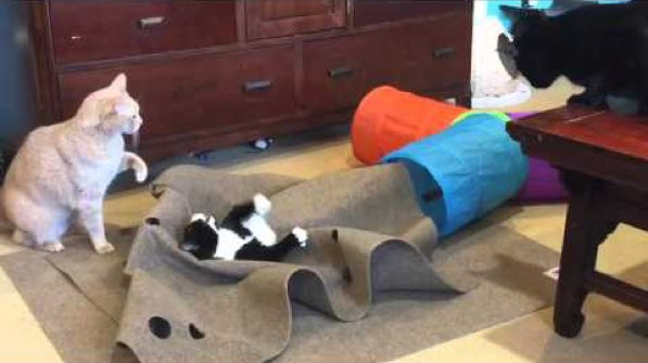 10 Amazing Cat Toys Your Kitty Must Have Right Now Cattime